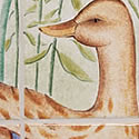 Detail of the femail duck